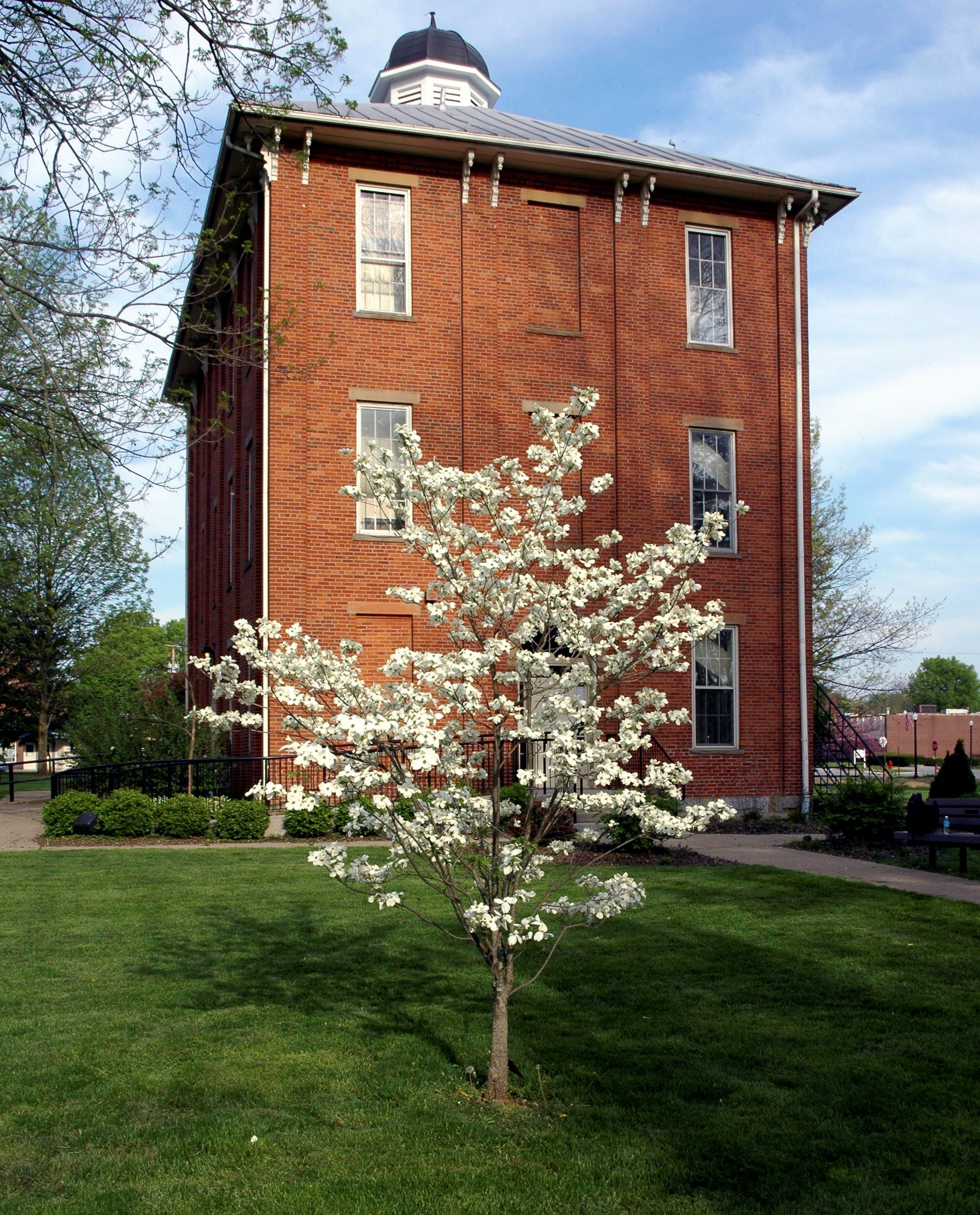 A tree with flowers in front of the Town Hall